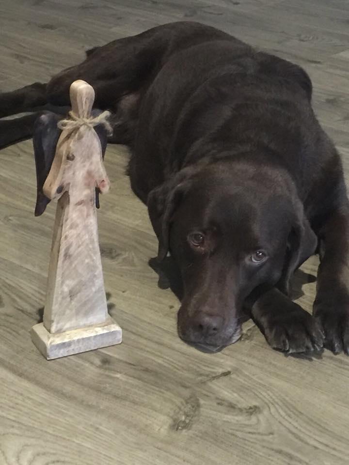 Links im Bild steht ein Engel aus Holz. Rechts daneben liegt Lisa und schaut ind die Kamera. Sie hat ihren Hundeblick aufgesetzt