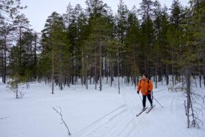Ich fahre auf Langlaufskiern durch einen schneebedeckten Nadelwald.
